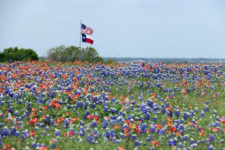 A Texas flag waves over a field of wildflowers